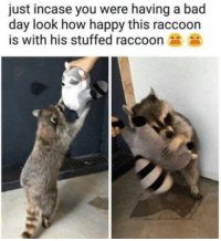 Bad day: just incase you were having a bad  day look how happy this raccoon  is with his stuffed raccoon