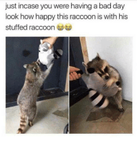 Wholesome trash panda: just incase you were having a bad day  look how happy this raccoon is with his  stuffed raccoo Wholesome trash panda