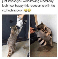Bad, Bad Day, and Happy: just incase you were having a bad day  look how happy this raccoon is with his  stuffed raccoon a happy raccoon