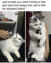 Bad, Bad Day, and Memes: Just incase you were having a bad  day look how happy this cat is with  his adopted kitten! 30-minute-memes:  Adopted kitten