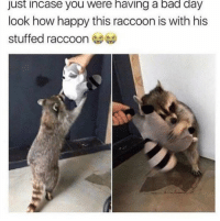 Bad, Bad Day, and Tumblr: just incase you were having a bad day  look how happy this raccoon is with his  stuffed raccoon awesomacious:  Casually making your day