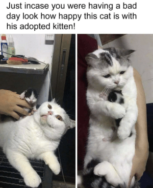 He's mine! via /r/memes https://ift.tt/2XmGMYl: Just incase you were having a bad  day look how happy this cat is with  his adopted kitten! He's mine! via /r/memes https://ift.tt/2XmGMYl