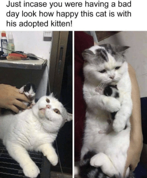 Cat is getting alot out of her day: Just incase you were having a bad  day look how happy this cat is with  his adopted kitten! Cat is getting alot out of her day