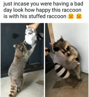 Making people happy since 2003: just incase you were having a bad  day look how happy this raccoon  is with his stuffed raccoon Making people happy since 2003