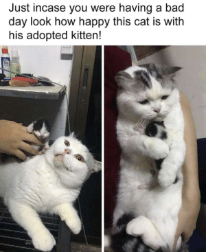 Wholesome 👌: Just incase you were having a bad  day look how happy this cat is with  his adopted kitten! Wholesome 👌