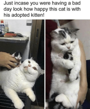Just sayin by Ri1020 MORE MEMES: Just incase you were having a bad  day look how happy this cat is with  his adopted kitten! Just sayin by Ri1020 MORE MEMES