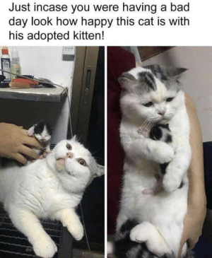 Is he truly happy or is he wondering what he has to deal with?: Just incase you were having a bad  day look how happy this cat is with  his adopted kitten! Is he truly happy or is he wondering what he has to deal with?