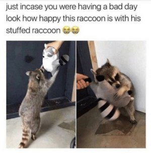 Bad, Bad Day, and Happy: just incase you were having a bad day  look how happy this raccoon is with his  stuffed raccoon when i was younger i saved up to buy this stuffed raccoon (it was 80 bucks) and i never bought it because that's really expensive for a 5 year oldabout a year ago i went to the store and they still had it so i wanted to buy it, but i was/am very brokei'm pretty sure the store still has it though