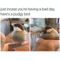 tag a friend (@memes) @bustlestudios: just incase you're having a bad day,  here's a pudgy bird tag a friend (@memes) @bustlestudios