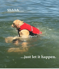 Devious Dog Trying To Drown His Human Is Getting Hilariously Memed: ..just let it happen. Devious Dog Trying To Drown His Human Is Getting Hilariously Memed