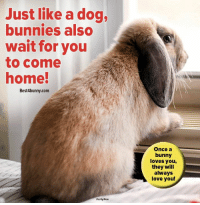 Just like a dog... www.best4bunny.com: Just like a dog,  bunnies also  wait for you  to come  home!  Best4bunny.com  Once a  bunny  loves you,  they will  always  love you! Just like a dog... www.best4bunny.com
