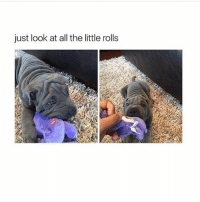 Memes, Link, and All The: just look at all the little rolls Hey hey hey!!! (Link is in my bio)