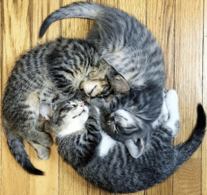 Cats, Symbol, and Look: Just me, or does this look like the airbending symbol? But with cats. Catbending.