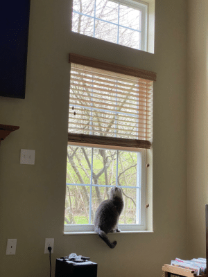 Just moved into a new house with 20' ceilings after 7 years in a 750sq ft townhouse. Little dude can't stop looking up, it's been 2 weeks: Just moved into a new house with 20' ceilings after 7 years in a 750sq ft townhouse. Little dude can't stop looking up, it's been 2 weeks