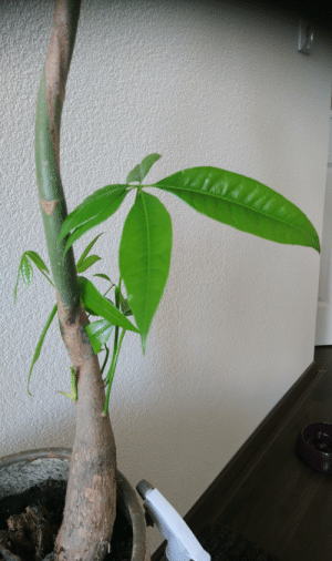 Hope, Never, and Thought: Just never give up hope, I thought it was the end for this plant, but I wanted to wait till the last leaf, I didn't gave up and so did the plant and it's growing new leafs now