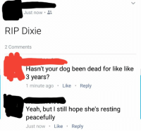 Memes, Yeah, and Hope: Just now.  RIP Dixie  2 Comments  Hasn't your dog been dead for like like  3 years?  1 minute ago Like Reply  Yeah, but I still hope she's resting  peacefully  Just nowLike Reply https://t.co/irRe71rmFI