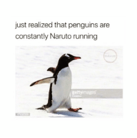 Naruto, Penguins, and Running: just realized that penguins are  constantly Naruto running  gettyimages  PASIEKA lmaoo