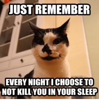 Sleeping, Sleep, and LOLcats: JUST REMEMBER  EVERY NIGHTI CHOOSE TO  NOT KILL YOUIN YOUR SLEEP A gentle reminder