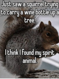 wine bottle: Just SaW a Squirrel trying  to carry a wine bottle up a  tree.  Ink found my spirit  animal