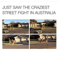 Street Fights, Street Fight, and Fighting: JUST SAW THE CRAZIEST  STREET FIGHT IN AUSTRALIA I saw the vid