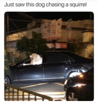 Saw, Squirrel, and Dank Memes: Just saw this dog chasing a squirrel Do what u need to do brother @fluffypiqasso