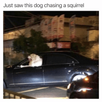 High speed nut chase (@cabbagecatmemes): Just saw this dog chasing a squirrel High speed nut chase (@cabbagecatmemes)