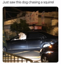 Memes, Saw, and Squirrel: Just saw this dog chasing a squirrel @pavlovmemes