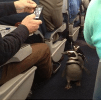 Just smile and wave boys, smile and wave: Just smile and wave boys, smile and wave