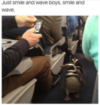 It's cool it's just penguins 🐧 on a plane...... 🤣😂 https://t.co/PYsJs8u4DZ: Just smile and Wave boys, smile and  Wave It's cool it's just penguins 🐧 on a plane...... 🤣😂 https://t.co/PYsJs8u4DZ