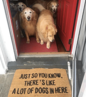 Just so you know via /r/funny https://ift.tt/2EeBCau: JUST SO YOU KNOW  THERE S LIKE  A LOT OF DOGS IN HERE Just so you know via /r/funny https://ift.tt/2EeBCau