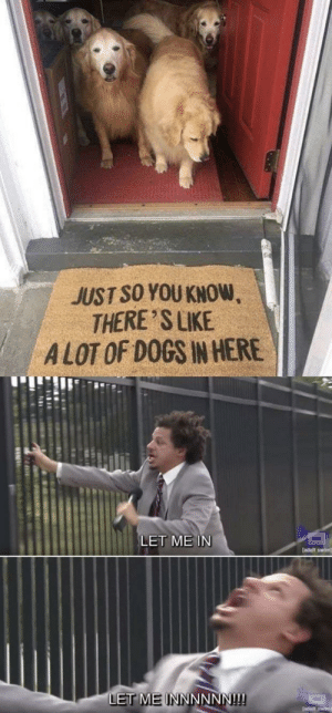 Dogs, Access, and Adult Swim: JUST SO YOU KNOW  THERE 'S LIKE  ALOT OF DOGS IN HERE  LET ME IN  [adult swim]  LET MEINNNNNN!!! Everyone has access to the palace of pups via /r/wholesomememes http://bit.ly/2Vdq93H