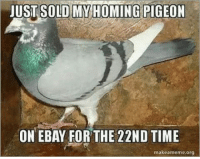 New business plan: JUST SOLD MY HOMING PIGEON  ON EBAY FOR THE 22ND TIME  makeameme org New business plan