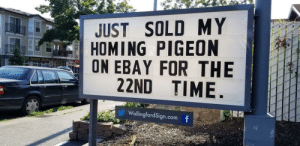 Result!: JUST SOLD MY  HOMING PIGEON  ON EBAY FOR THE  22ND TIME  OKBEADTE SALON  SEAT  WallingfordSign.com f Result!