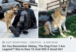 I Am Legend, Girl, and Good: JUST SOMETHING CREATIVE 4-MIN READ  Do You Remember Abbey, The Dog From I Am  Legend'? She Is Now 13 And Still A Good Girl Good girl is still as good years later