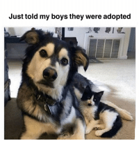 Memes, Boys, and 🤖: Just told my boys they were adopted ...and they dont understand what im talking about