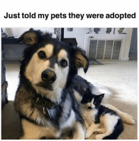 Memes, Pets, and 🤖: Just told my pets they were adopted And i dont think they understood me