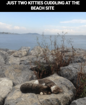 Cuteness overloaded: JUST TWO KITTIES CUDDLING AT THE  BEACH SITE Cuteness overloaded