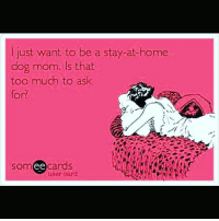 I really don't think this is asking too much, am I right ??? dogsofinstagram doglover dogmom puppylove pups: just want to be a stay-at-home  dog mom. Is that  too much to ask  for?  somee cards  user card I really don't think this is asking too much, am I right ??? dogsofinstagram doglover dogmom puppylove pups