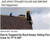 """Fire, Thought, and Parrot: Just when I thought my pet was talented  this happened  August 14th 2018-43K Shares  Parrot Trapped On Roof Keeps Telling Fire  Crew To """"F**k Off"""" Fluck off"""