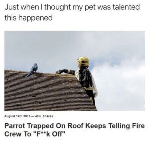"Dank, Fire, and Memes: Just when l thought my pet was talented  this happened  August 14th 2018-43K Shares  Parrot Trapped On Roof Keeps Telling Fire  Crew To ""F**k Off"" My pet is nothing compared to this birb by fannypackmcb MORE MEMES"