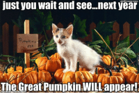 Kitties, Memes, and Pumpkin: just you wait and see...next year  Pumpkins  so  The Great Pumpkin WILL appear! I believe you Linus kitty, I believe you <3