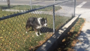 Tumblr, Blog, and Game: justa-littlepup:  unboundblackboi:  thebestoftumbling:  clever dog tricked me into game of fetch  I'm so emotional right now   Smartest dog ever