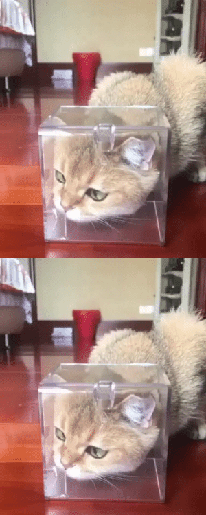 justcatposts:  A rare moment caught on camera(via): justcatposts:  A rare moment caught on camera(via)