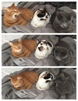 justcatposts:A short story.: justcatposts:A short story.