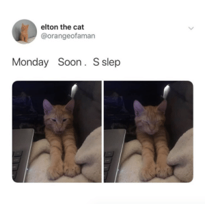 justcatposts:  Accurate photo of me right nowvia @orangeofaman: justcatposts:  Accurate photo of me right nowvia @orangeofaman
