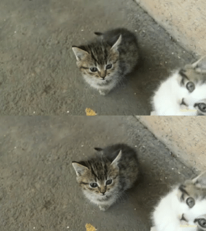 justcatposts:  Adorable kitten stumblesvia u/BlondeEnthusiast: justcatposts:  Adorable kitten stumblesvia u/BlondeEnthusiast