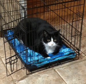 justcatposts: built for dog used by chonk : justcatposts: built for dog used by chonk