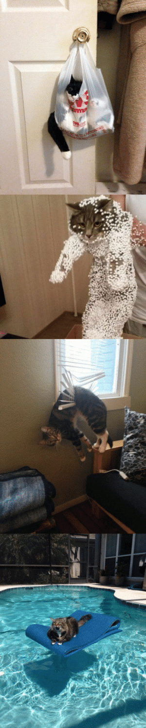 justcatposts:  Cat mistakes: justcatposts:  Cat mistakes