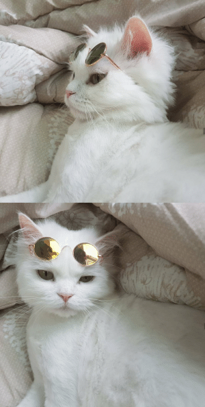 justcatposts:  Cool cat: justcatposts:  Cool cat