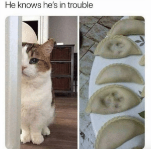 justcatposts:He's innocent: justcatposts:He's innocent